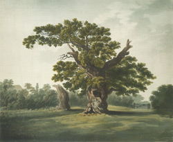An east view of Yardley Oak